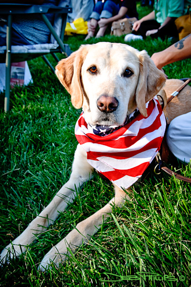 A patriotic Tea Party dog came to the Winston-Salem Tax Day Tea Party rally with her master.